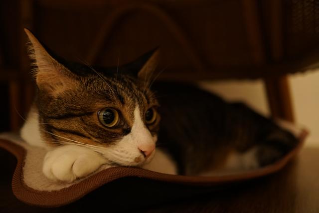 阿波座 にゃんぐりら 猫店長