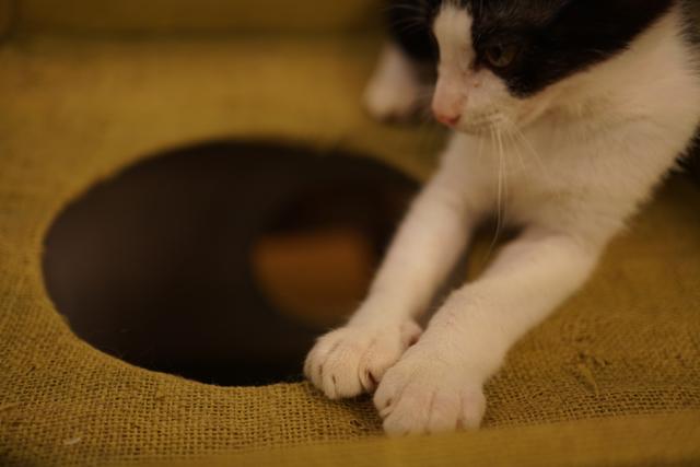 阿波座 にゃんぐりら 子猫